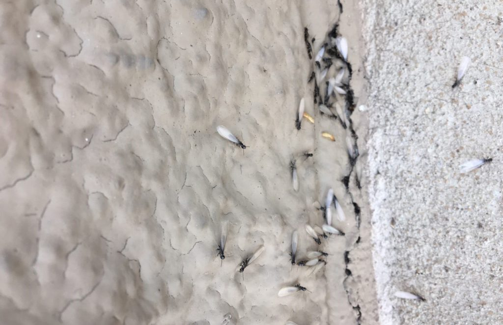 Bryan/College Station Termite Control Services