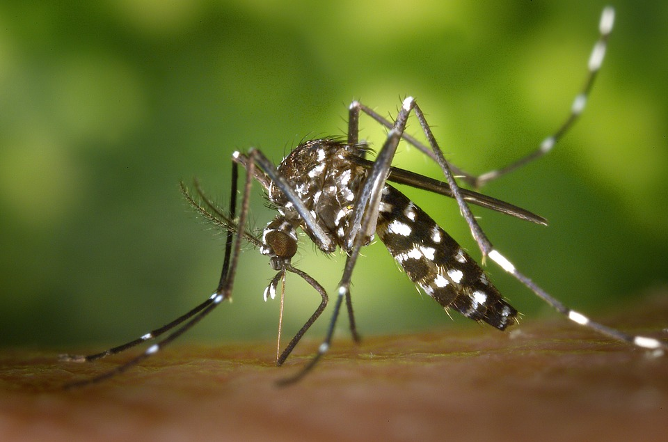 mosquitoes in bryan/college station