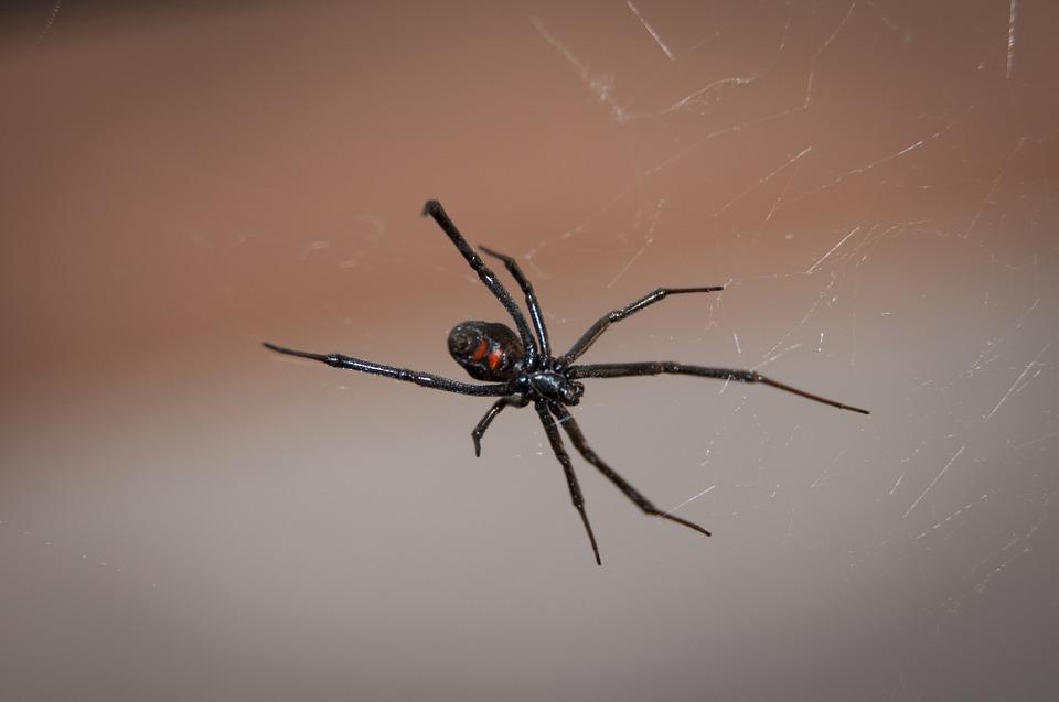 creepy crawlers of Halloween: spiders